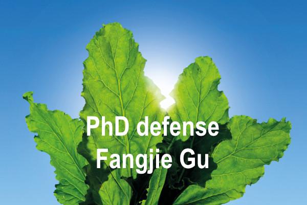 PhD defense Fangjie Gu